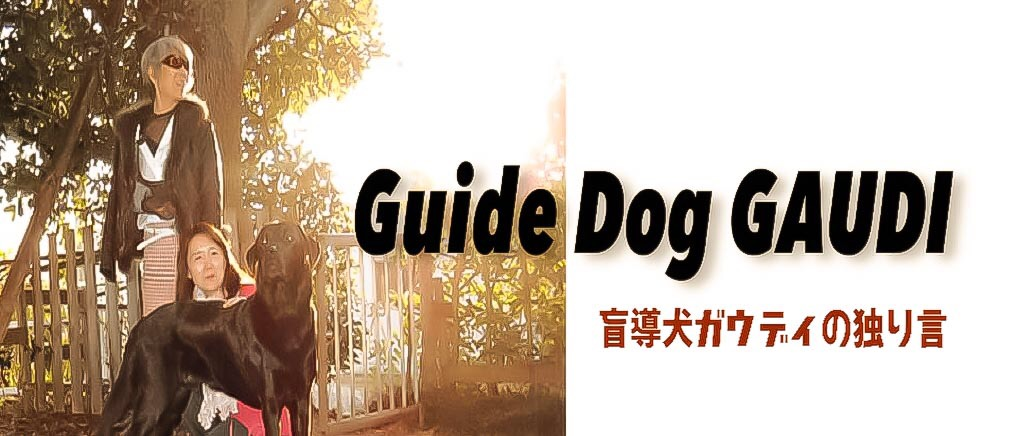 盲導犬ガウディの独り言
